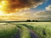 Rural ACO consortium expands membership