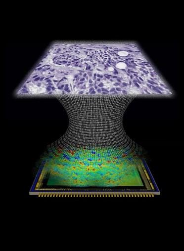 UCLA Lab Develops Lens Free Microscope
