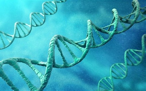 Harvard University Uncovers DNA Switch That Controls Genes for Whole-Body Regeneration