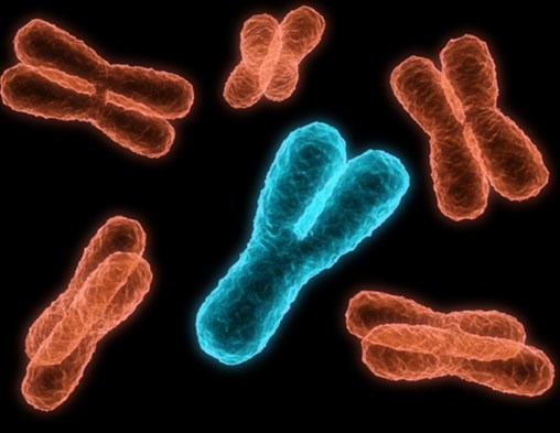 Short Telomeres Could Be Independent Risk Factor for Age-Related Functional Decline